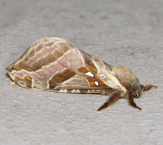 Sthenopis argenteomaculatus - Somerset Lake - Hancock, NY - Sthenopis argenteomaculatus