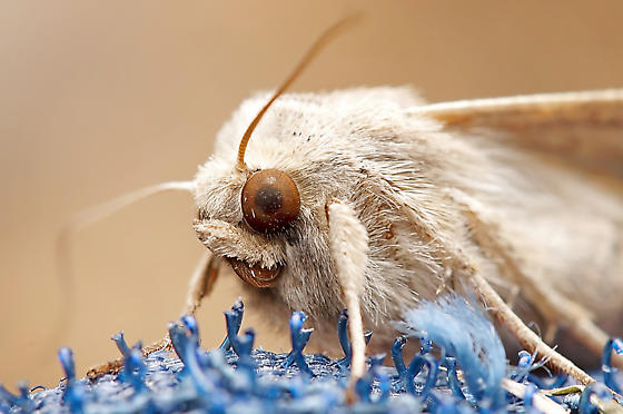 Moth...?