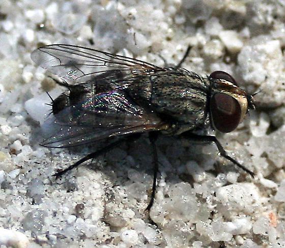 Satellite Fly! - female