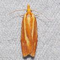 3699 Three-streaked Sparganothis - Sparganothis tristriata