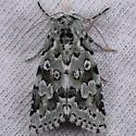 Bryolymnia viridata