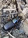 Unknown beetle - Odontotaenius disjunctus