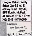 Quedius (Microsaurus) montanicus Casey - Quedius montanicus