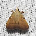 Drab Condylolomia - Hodges#5571 - Condylolomia participalis