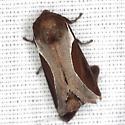 Skiff Moth - Hodges #4671 - Prolimacodes badia
