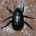 Beetle - Pelidnota lugubris