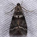 Unknown moth - Apomyelois bistriatella