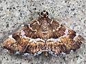 Hymenia perspectalis - Spotted Beet Webworm Moth - Hymenia perspectalis