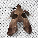Dimorphic Tosale Moth - Hodges #5556 - Tosale oviplagalis - male