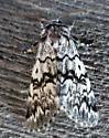 Panthea acronyctoides - Black Zigzag - Hodges#9177 - Panthea acronyctoides