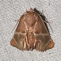 Shagreened Slug Moth - Apoda biguttata