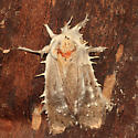 Fungus covered moth