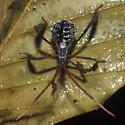 Bug 7808