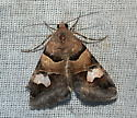 Moth - Drasteria pallescens