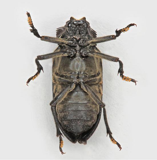 BG3030 E8684 - Sandalus - male