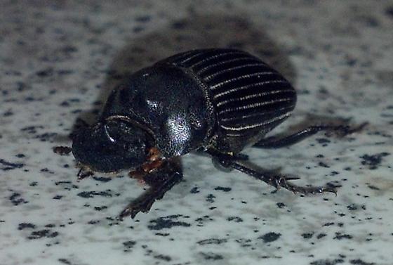 scarab, at lights at night
