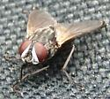 pesky fly on lakeshore - Musca domestica