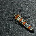 Moth 09.08.29 (1) - Atteva aurea