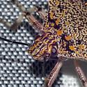 Giant Stink Bug - Alcaeorrhynchus grandis