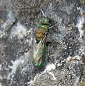 Hymenoptera 7-13-11 05a