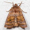 Three-Spotted Sallow - Hodges#9935 - Eupsilia tristigmata