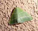 Green moth. possibly Nemoria caerulescens - Dichordophora phoenix