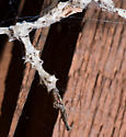 The web is similar to a trashline orb weaver - there's lots of trash there
