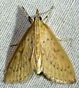 7/15/19 moth 2 - Crocidophora pustuliferalis - female