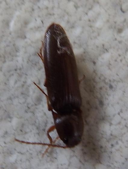Bug found on kitchen floor