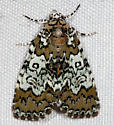 9061, Cerma cora, Owl-eyed Bird Dropping Moth - Cerma cora