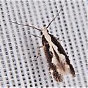 Agnippe prunifoliella