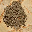 Herd III Report - Cerastipsocus venosus