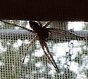 Large yellow tinted spider