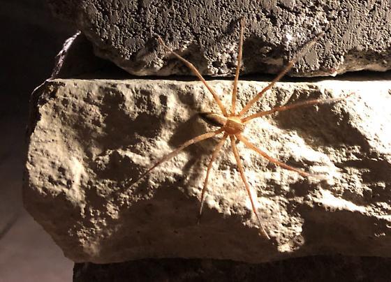 Unknown Spider Southwestern Ohio