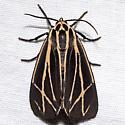 Apantesis phalerata - female