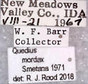 Quedius (Microsaurus) mordax Smetana - Quedius mordax