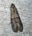 Ephestiodes infimella