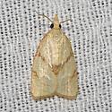 Moth unknown - Cenopis pettitana