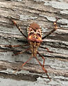 A well dressed Stink Bug perhaps?