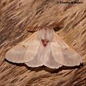 Hemileuca hualapai - male