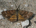 Moth - Ematurga amitaria - Ematurga amitaria
