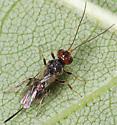 Wasp ID - female