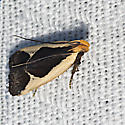 Cream-bordered Dichomeris - Hodges#2295 - Dichomeris flavocostella