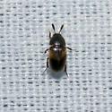 Beetle: 2012.04.05.18615 - Colon