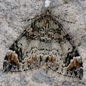 Dark Marbled Carpet - Dysstroma citrata