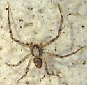 Spider July 21