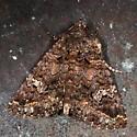 moth - Coxina cinctipalpis
