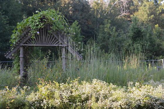 Mountain Mint Garden
