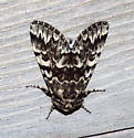Is this a black zigzag moth? - Panthea acronyctoides