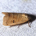 Wavy Lined Mallow Moth - Hodges #9168 - Bagisara repanda